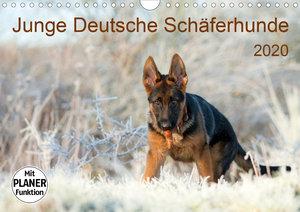 Junge Deutsche Schäferhunde (Wandkalender 2020 DIN A4 quer)