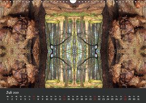 Baumgeister, Gesichter des Waldes (Wandkalender 2019 DIN A3 quer
