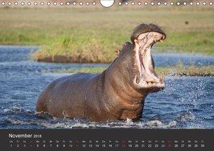Afrikas Dickhäuter. Hippos, Nashörner und Elefanten