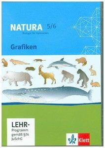 Natura - Biologie für Gymnasien. Neubearbeitung. Grafiken 5. - 6