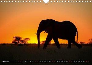 Faszination Botswana (Wandkalender 2019 DIN A4 quer)