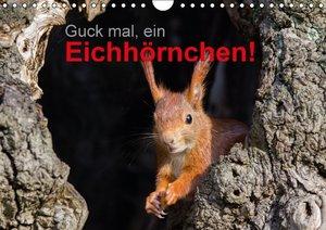 Guck mal, ein Eichhörnchen! (Wandkalender 2016 DIN A4 quer)
