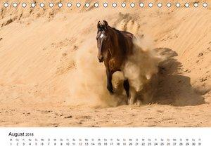 Marwaris - Die magischen Pferde Indiens