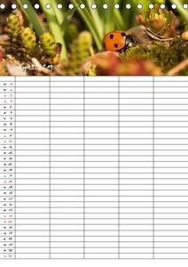 Glückskäfer / Familienplaner (Tischkalender 2019 DIN A5 hoch)