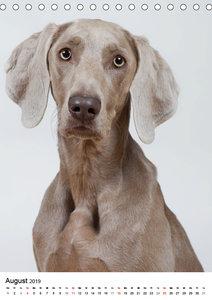Hunde im Portrait (Tischkalender 2019 DIN A5 hoch)