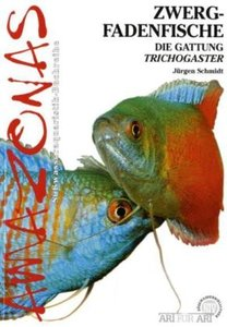 Art für Art: Zwergfadenfische