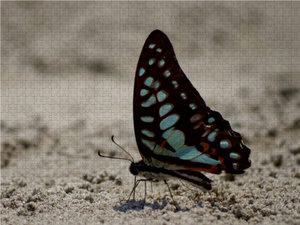 Ein Motiv aus dem Kalender Zarte Schönheiten - Schmetterlinge au