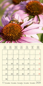 The bee diary (Wall Calendar 2020 300 × 300 mm Square)