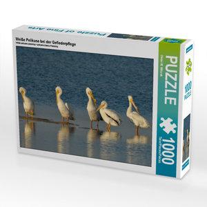 Weiße Pelikane bei der Gefiederpflege 1000 Teile Puzzle quer
