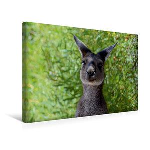 Premium Textil-Leinwand 45 cm x 30 cm quer Wallaby, Western Aust