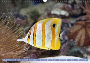 Bunte Welt der Fische