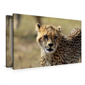 Premium Textil-Leinwand 90 cm x 60 cm quer Gepardin Malaika