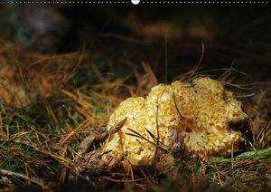 Pilze in unseren Wäldern (PosterbuchDIN A4 quer)