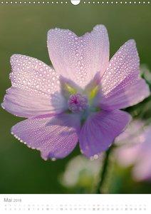 Blumen, die heilen