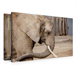 Premium Textil-Leinwand 75 cm x 50 cm quer Afrikanischer Elefant
