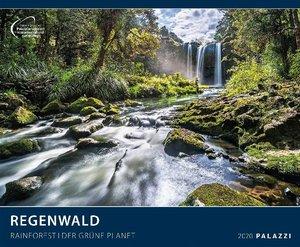 Regenwald 2020