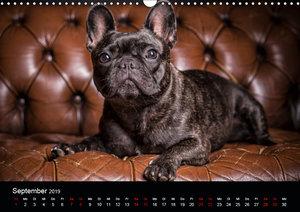 French Bulldog (Wandkalender 2019 DIN A3 quer)