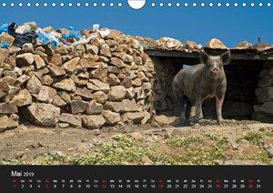 Nutztiere als Landschaftspfleger (Wandkalender 2019 DIN A4 quer)