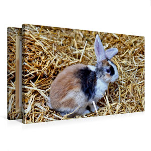 Premium Textil-Leinwand 75 cm x 50 cm quer Dreifarbiges Kaninche