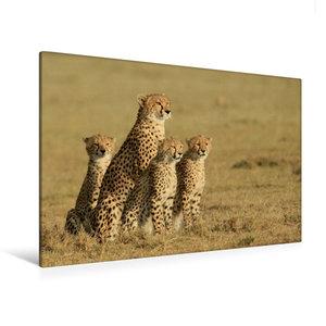 Premium Textil-Leinwand 120 cm x 80 cm quer Geparden auf Beutesu