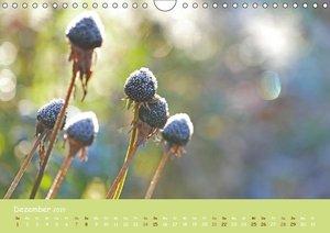 Naturwunder Blüten (Wandkalender 2019 DIN A4 quer)