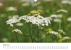 Arzneipflanzen (Wandkalender 2019 DIN A3 quer)
