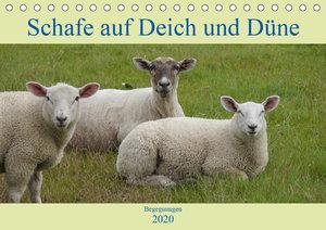 Schafe auf Deich und Düne (Tischkalender 2020 DIN A5 quer)