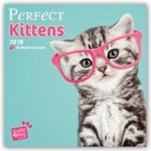 Perfect Kittens - Katzenbabies 2018 - 18-Monatskalender