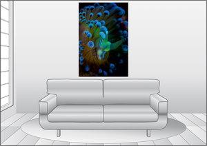 Premium Textil-Leinwand 80 cm x 120 cm hoch Janolus Cristatus