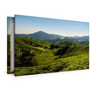 Premium Textil-Leinwand 120 cm x 80 cm quer Teeplantage