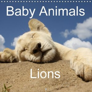 Baby Animals - Lions (Wall Calendar 2015 300 × 300 mm Square)