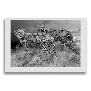 Premium Textil-Leinwand 75 cm x 50 cm quer Junge Gepardengeschwi