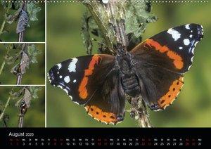 Schmetterlinge - Wunder der Verwandlung (Wandkalender 2020 DIN A