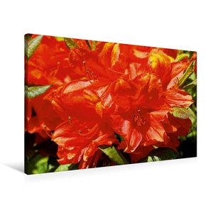 Premium Textil-Leinwand 90 cm x 60 cm quer Rhododendron im Garte