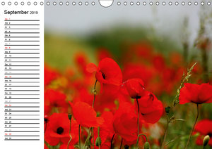 Mohn - Die Faszination in Rot (Wandkalender 2019 DIN A4 quer)