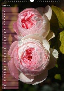 Rosen für DICH / Geburtstagskalender