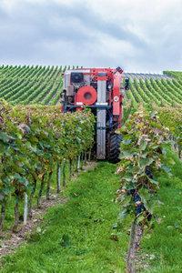 Premium Textil-Leinwand 60 cm x 90 cm hoch Weinlese, nicht nur m