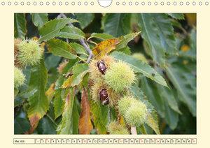 Früchte-Allerlei an Baum, Strauch und Co. (Wandkalender 2020 DIN