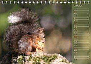 Eichhörnchen erobern unsere Herzen