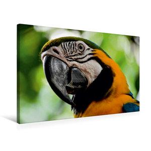 Premium Textil-Leinwand 75 cm x 50 cm quer Papagei