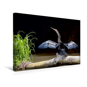 Premium Textil-Leinwand 45 cm x 30 cm quer Schlangenhalsvogel