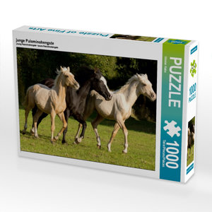 junge Palominohengste 1000 Teile Puzzle quer