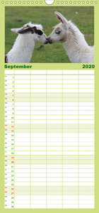 Lama-Kalender - Familienplaner hoch