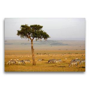 Premium Textil-Leinwand 75 cm x 50 cm quer Masai Mara NP, Kenia