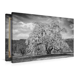 Premium Textil-Leinwand 90 cm x 60 cm quer Baumwunder