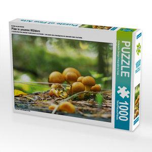 CALVENDO Puzzle Pilze in unseren Wäldern 1000 Teile Lege-Größe 6
