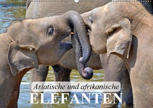 Asiatische und afrikanische Elefanten