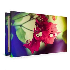 Premium Textil-Leinwand 90 cm x 60 cm quer Bougainvillea Blüten,