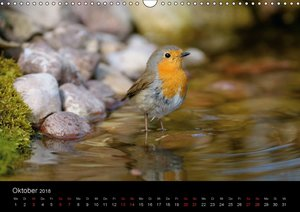 Vögel Stars vor der Kamera