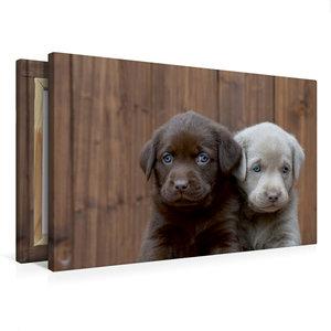 Premium Textil-Leinwand 75 cm x 50 cm quer Labrador Geschwister